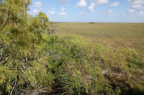 Parc National des Everglades - Pa-hay-okee Overlook Trail