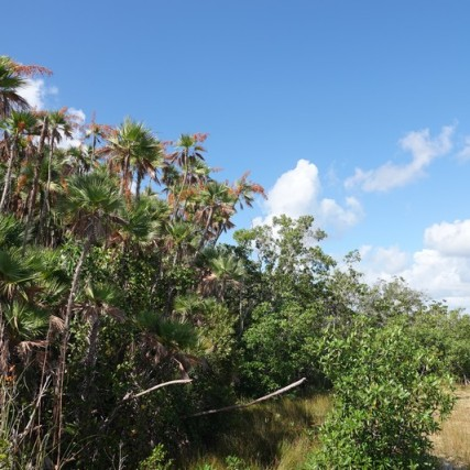 Parc National des Everglades - Mahogany Hammock Trail
