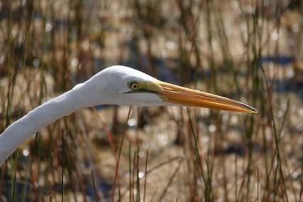 Parc National des Everglades - Mahogany Hammock Trail