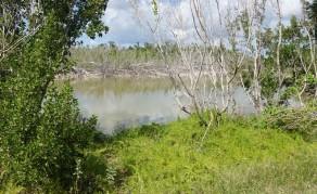 Parc National des Everglades - Eco Pond