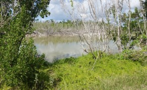 Parc National des Everglades - Eco Pond