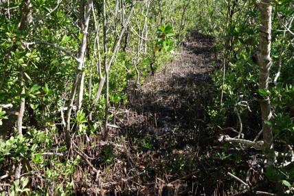 Crane Point Museum and Nature Center - Mangrove noire
