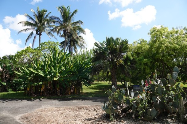 Miami - Fruit & Spice Park
