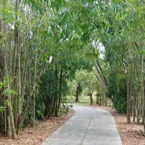 Miami - Fruit & Spice Park - Bambous