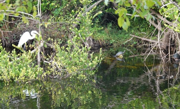 Parc National des Everglades - Shark Valley