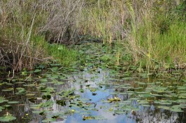 Parc National des Everglades - Shark Valley