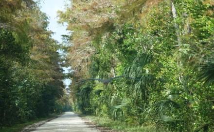 A la lisière du Parc National des Everglades - Loop Road - Héron à droite