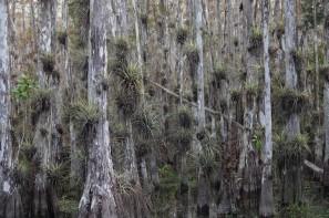 A la lisière du Parc National des Everglades - Loop Road - Biotope