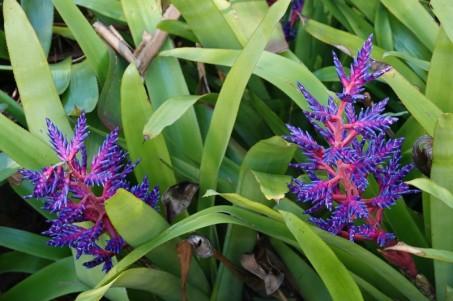 Sarasota - Marie Selby Botanical Gardens