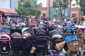 Parc Disney - Hollywood Studios - Forêt de poussettes !