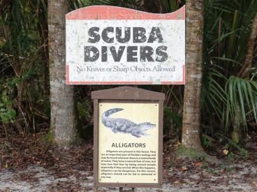 Alexander Springs - On est prévenu : on peut plonger, mais il y faut partager le territoire avec les alligators !