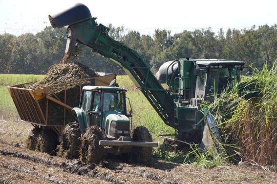 Environs d'Houma - Récolte de la canne à sucre