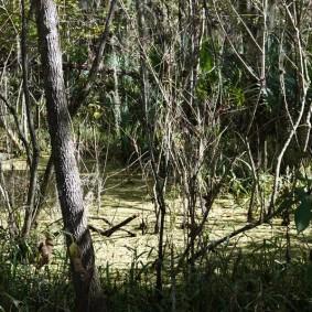Vers Houma - Trail Mandalay National Wildlife Refuge