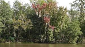 Vers Houma - Dans le bayou