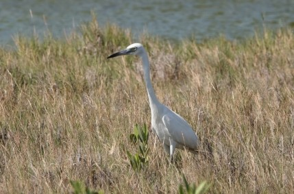 San Pedro - Secret Beach - Aigrette