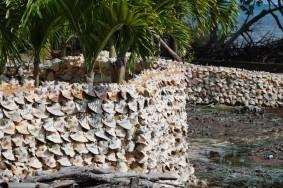 Caye Caulker - Muret en conches