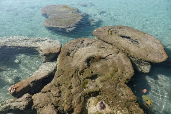 Bacalar - Cenote Cocalitos - Stromatolithes
