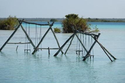 Bacalar - Cenote Cocalitos