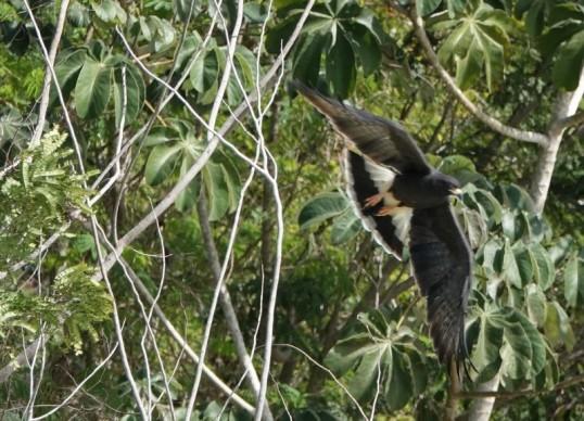 Bacalar - Cenote Cocalitos - Rapace