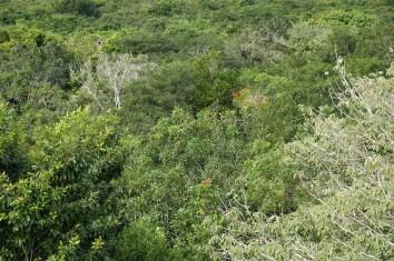 Chemin dans la jungle - Vue depuis le Mirador