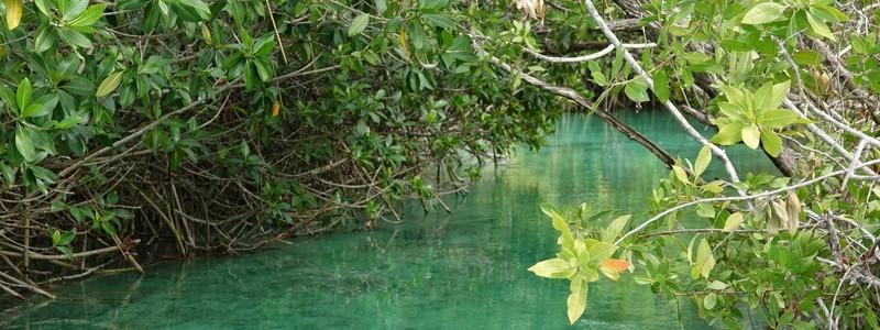 Superbe balade à pied et en bateau dans la réserve de biosphère de SianKa'an
