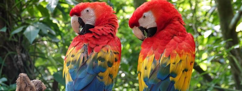 Superbe découverte des animaux du Mexique, à l'Ecoparque Aluxes dePalenque
