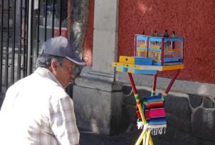 Coyoacan - A l'extérieur du Marché central - Divination par tirage de cartes par des oiseaux !