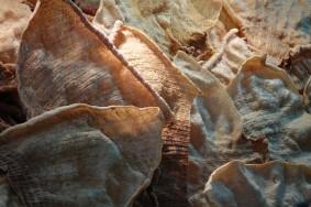 Coyoacan - Marché central - Beignets de viande et de crevettes