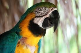 Palenque - Ecoparque Aluxes - Ara