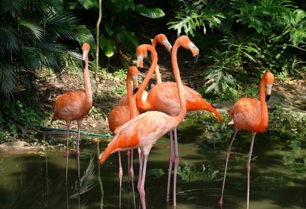 Palenque - Ecoparque Aluxes - Flamants roses