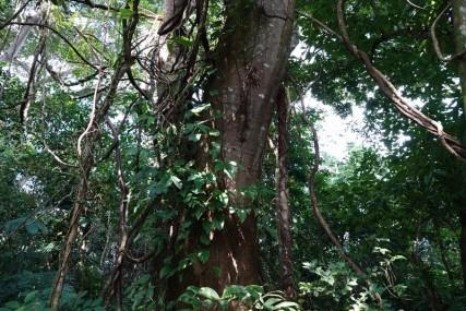 Palenque - Ecoparque Aluxes - Bel environnement