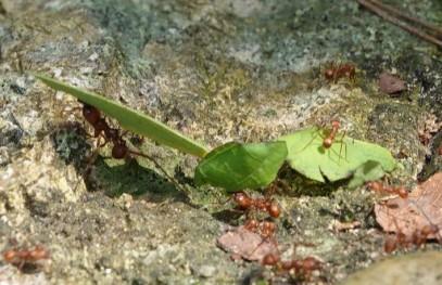 Palenque - Ecoparque Aluxes - Fourmis