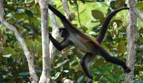 Palenque - Ecoparque Aluxes - Singe