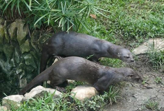 Palenque - Ecoparque Aluxes - Loutres