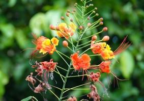 Palenque - Ecoparque Aluxes
