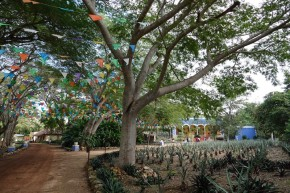 Uxmal - Dans le jardin du Musée du Chocolat