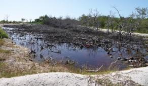 San Pedro - Balade vers le sud de l'ile - Pauvre mangrove !