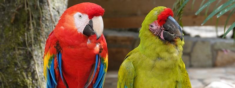 Très belle découverte du Macaw Mountain Bird Park, un fabuleux refuge pour les oiseauxtropicaux