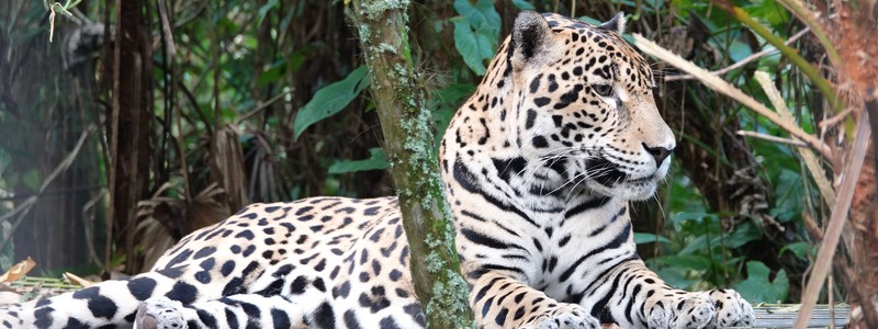 Deux jours fabuleux au lodge du Zoo de Belize, entre jungle etsavane