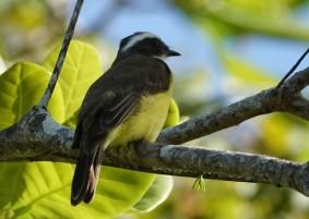 Bermudian Landing - Nature Resort