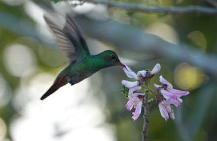 Bermudian Landing - Nature Resort - Colibri