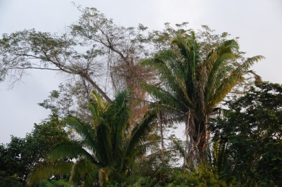 Bermudian Landing - Balade en canoé
