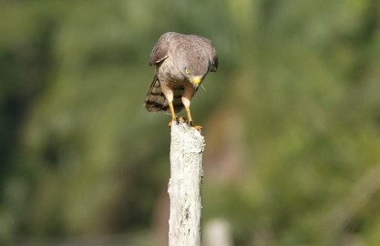 Bermudian Landing - Faucon