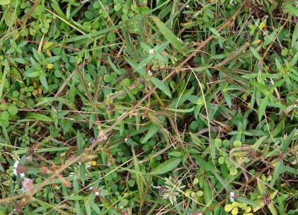 Bermudian Landing - Plante rétractile - ...et après l'avoir touchée !