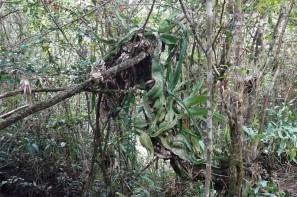 Lodge du Zoo de Belize