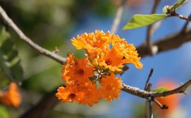 Flores / San Miguel