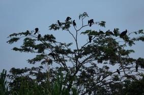 Barra Lampara - Retour vers l'Hotelito Perdido - Iles aux oiseaux (cormorans)
