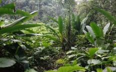 Barra Lampara - Rando vers le village maya Gran Plan Tatin