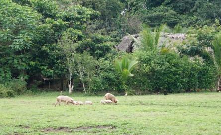 Barra Lampara - Village maya Gran Plan Tatin - Terrain de foot et champ pour les cochons !