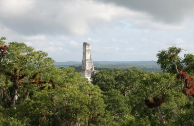 Tikal - Vue depuis la plateforme du Mundo Perdido